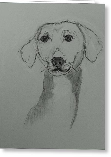 Guard Dog Drawings Greeting Cards - Azawakh Greeting Card by Image Source