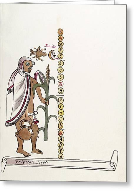 Aztec Month Etzalcualiztli Greeting Card by Library Of Congress