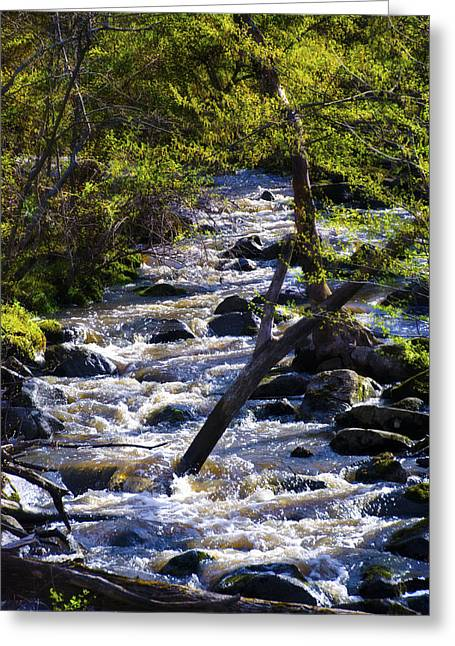 Brookes Greeting Cards - Babbling Brook Greeting Card by Bill Cannon