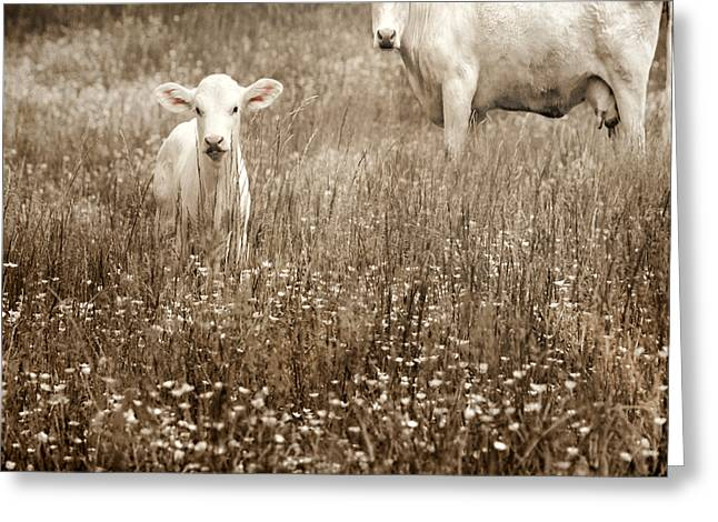 Barnyard Animals Greeting Cards - Babe of Mine Greeting Card by Steven  Michael