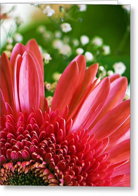 Babies Breath And Gerber Daisy Greeting Card by Marilyn Hunt