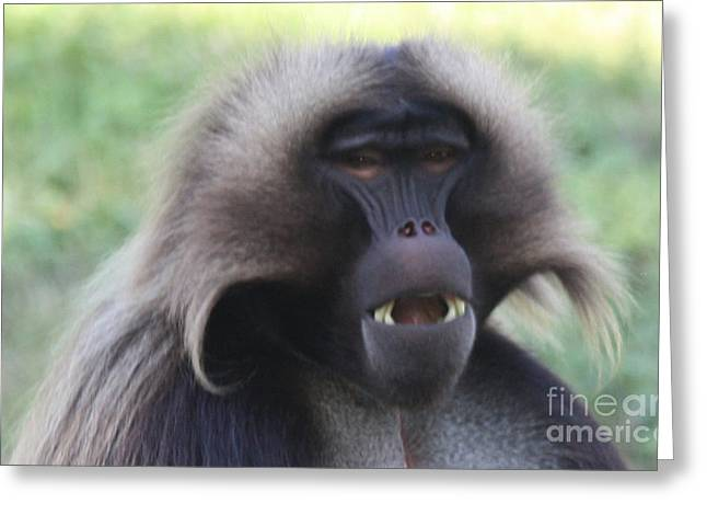 Art In Acrylic Greeting Cards - Baboon Greeting Card by John Telfer
