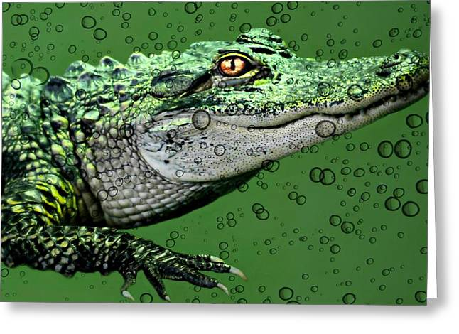 Nature Center Greeting Cards - Baby Alligator Greeting Card by Diana Angstadt