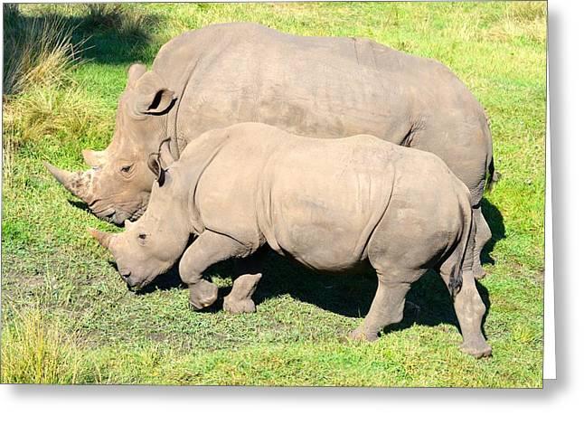 Rhinoceros Greeting Cards - Baby and Big Rhinoceros Greeting Card by Richard Bryce and Family