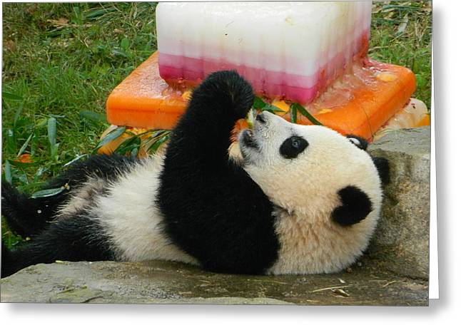 Wildlife Celebration Greeting Cards - Baby Bao Baos First Birthday Greeting Card by Emmy Marie Vickers