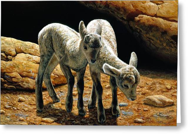 Bighorn Greeting Cards - Baby Bighorns Greeting Card by Crista Forest