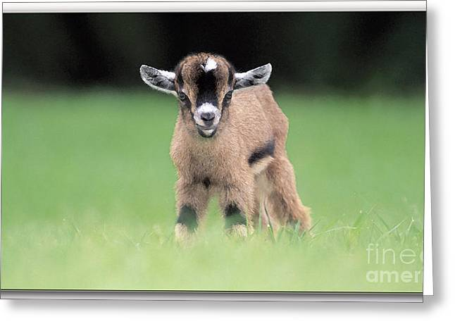 Babies Greeting Cards - Baby Billy Goat Painting Greeting Card by Marvin Blaine