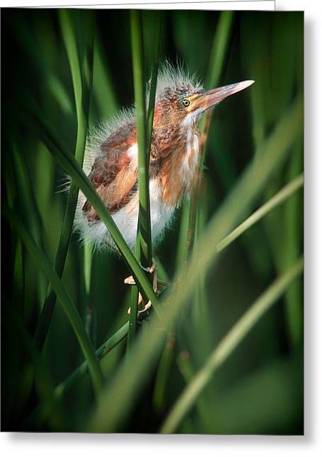 Baby Bird Greeting Cards - Baby Bird Greeting Card by Patrick M Lynch