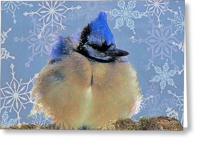 Baby Blue Jay II Greeting Card by Janette Boyd