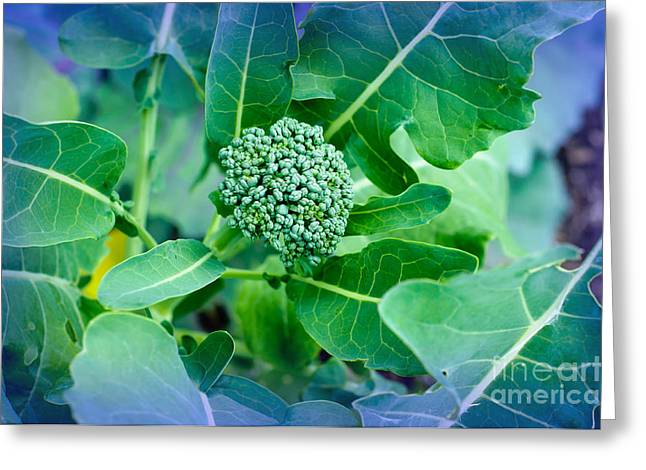 Broccoli Greeting Cards - Baby Broccoli - Vegetable - Garden Greeting Card by Andee Design