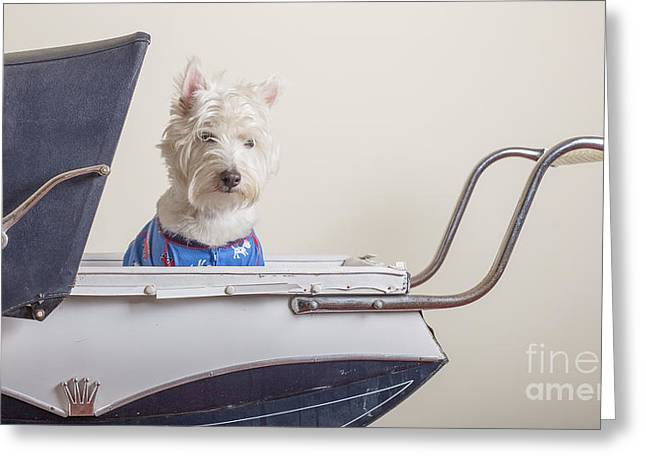 Puppies Greeting Cards - Baby Buggy Ride Greeting Card by Edward Fielding