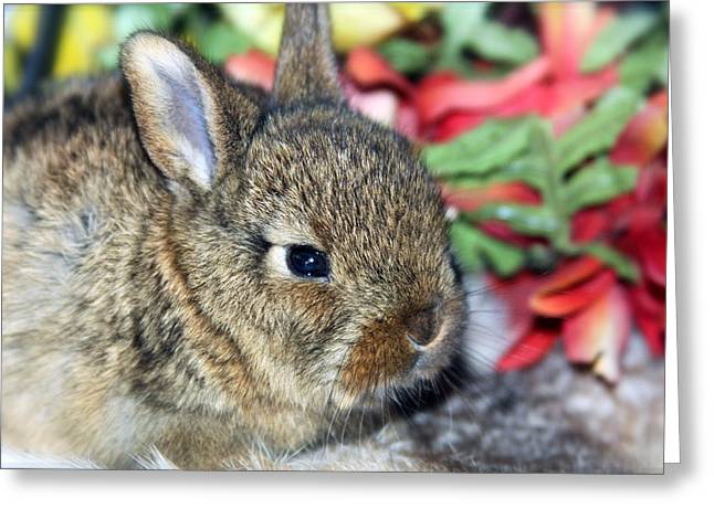 Bunny Greeting Cards - Baby Bunny Rabbit Greeting Card by Karon Melillo DeVega