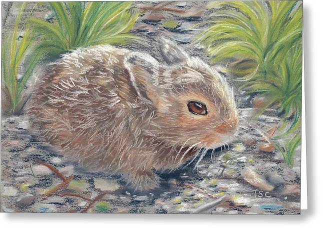 Hare Pastels Greeting Cards - Baby Bunny Greeting Card by Tammy Crawford