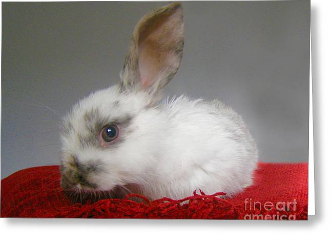 Terri Waters Greeting Cards - Baby Bunny Greeting Card by Terri  Waters