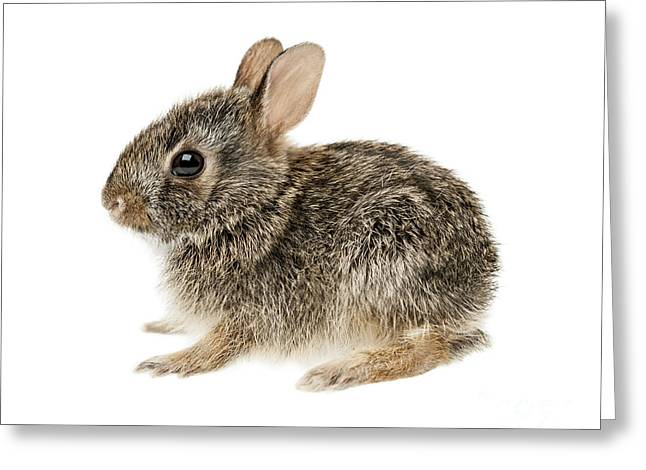 Hare Greeting Cards - Baby cottontail bunny rabbit Greeting Card by Elena Elisseeva