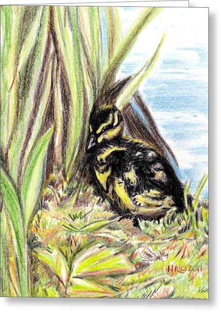 Baby Mallards Drawings Greeting Cards - Baby Duck Greeting Card by Heidi Kunkel