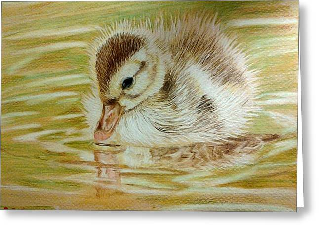 Baby Mallards Drawings Greeting Cards - Baby Duck on Pond Greeting Card by Sara DeForge