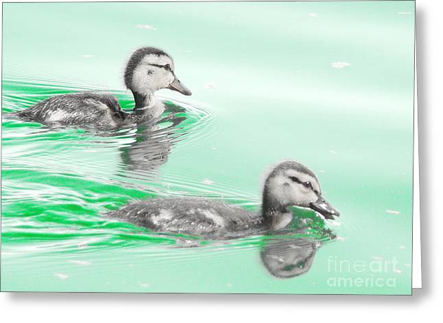Baby Mallards Digital Art Greeting Cards - Baby ducklings Greeting Card by Beverly Guilliams