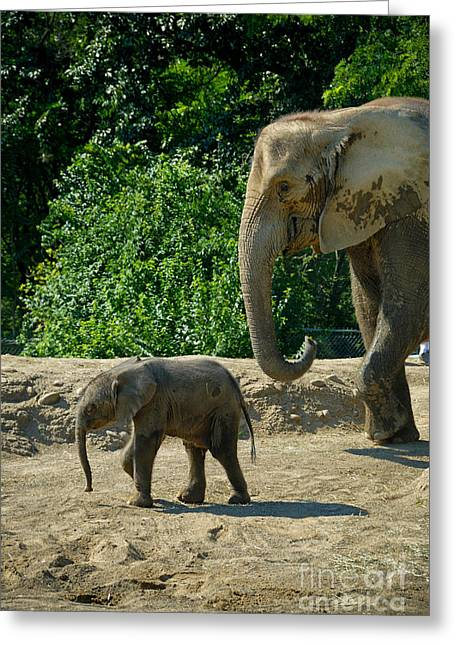 Ears Greeting Cards - Baby Elephant Born at Pittsburgh Zoo Greeting Card by Amy Cicconi