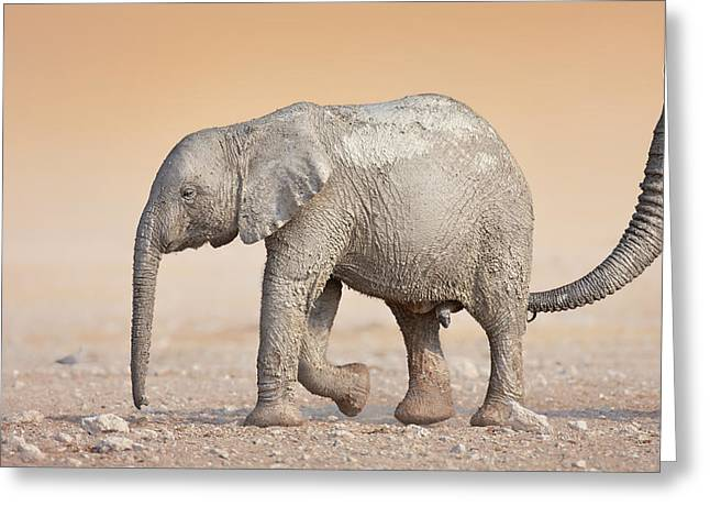 Touch Greeting Cards - Baby elephant  Greeting Card by Johan Swanepoel