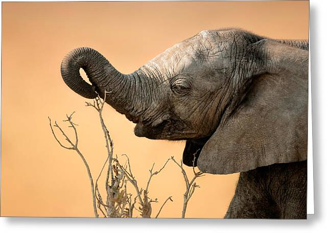 Reach Greeting Cards - Baby elephant reaching for branch Greeting Card by Johan Swanepoel