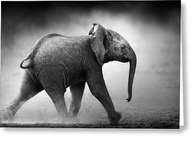 One Photograph Greeting Cards - Baby Elephant running Greeting Card by Johan Swanepoel