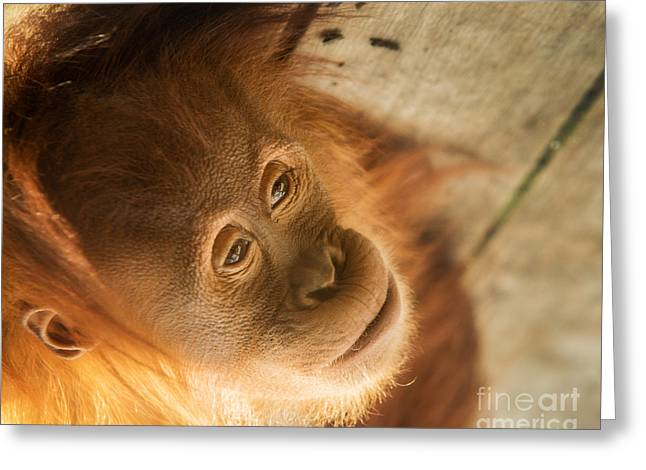 Concentration Greeting Cards - Baby Face Greeting Card by Ray Warren