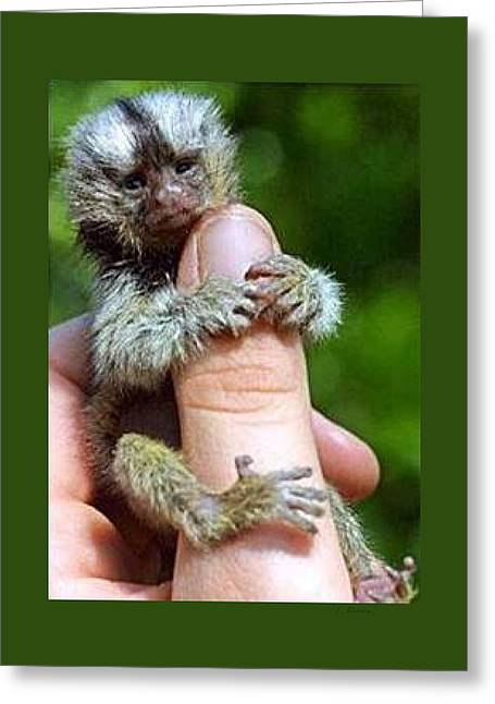 Fed Mixed Media Greeting Cards - Baby Finger Monkey Green Border Greeting Card by L Brown