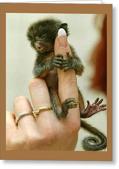 Fed Mixed Media Greeting Cards - Baby Finger Monkey Tan Border Greeting Card by L Brown