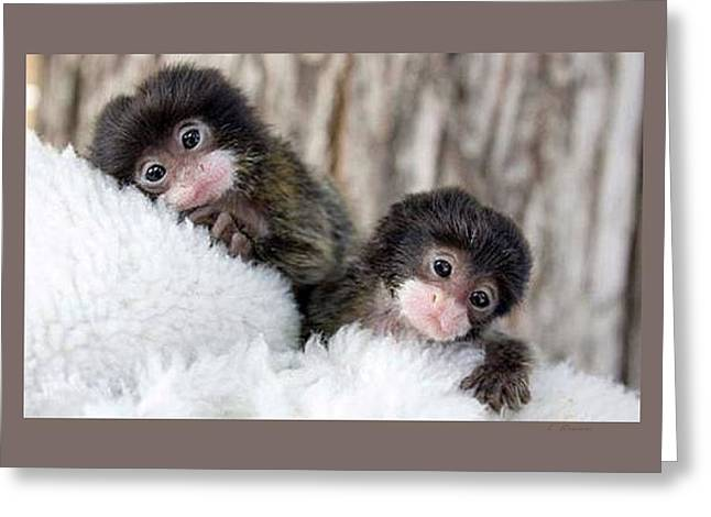Fed Mixed Media Greeting Cards - Baby Finger Monkeys Grey Border Greeting Card by L Brown