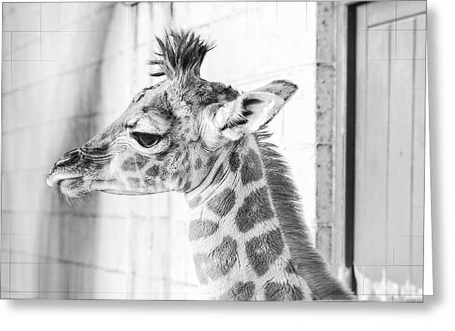 Punky Greeting Cards - Baby Giraffe Greeting Card by Carol Malky