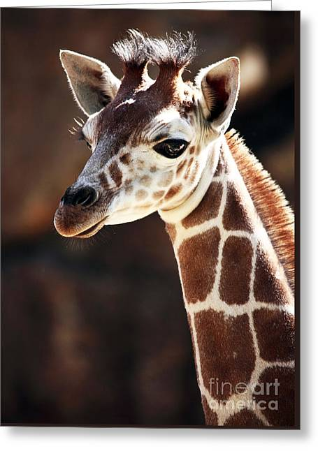 Phillies Posters Greeting Cards - Baby Giraffe Greeting Card by John Rizzuto