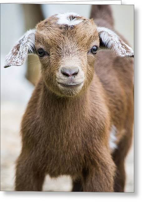 Baby Donkey Greeting Cards - Baby Goat Greeting Card by Shelby  Young