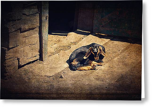 Goat Digital Greeting Cards - Baby Goat Taking A Nap I Greeting Card by Maria Angelica Maira