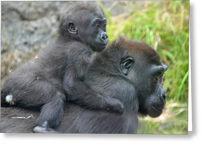 Love The Animal Greeting Cards - Baby Gorilla Going for a Ride  on Mommys Back Greeting Card by Jim Fitzpatrick