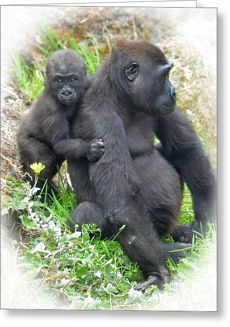 Bonding Digital Art Greeting Cards - Baby Gorilla Holding onto His Mommy Greeting Card by Jim Fitzpatrick