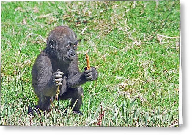 Love The Animal Greeting Cards - Baby Gorilla Playing Hunter Greeting Card by Jim Fitzpatrick