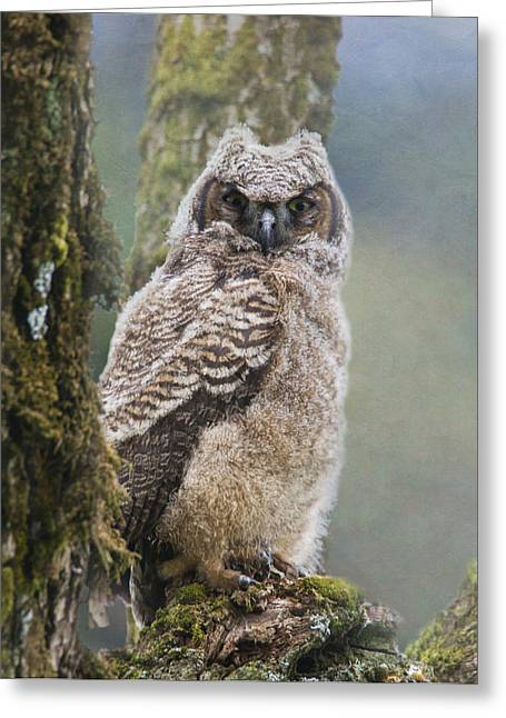 Fledglings Greeting Cards - Baby Great Horned Owl Greeting Card by Angie Vogel