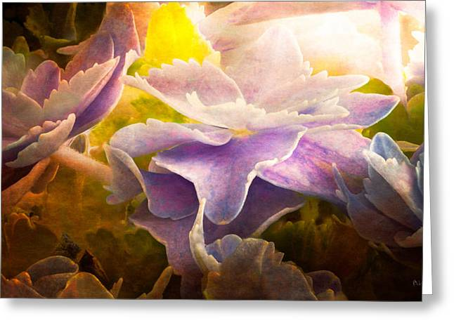 Mural Photographs Greeting Cards - Baby Hydrangeas Greeting Card by Bob Orsillo