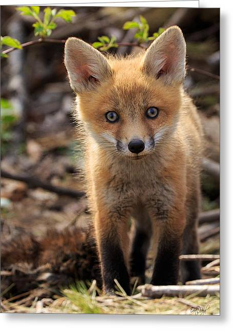 Fox Kit Greeting Cards - Baby in the Wild Greeting Card by Everet Regal