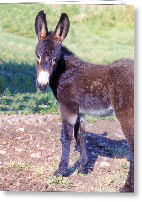 Baby Donkey Greeting Cards - Baby Jenny Greeting Card by Jan Amiss Photography