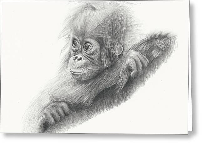 Orangutan Drawings Greeting Cards - Baby Orangutan Greeting Card by Sandra Weiner
