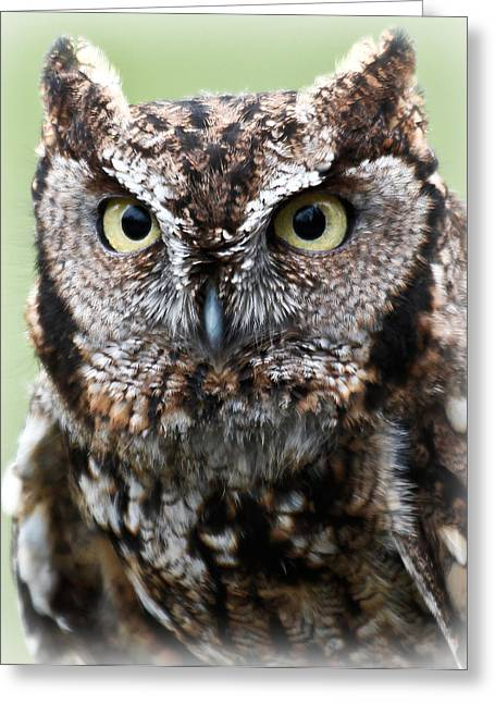 Barn Pen And Ink Greeting Cards - Baby Owl Eyes Greeting Card by Athena Mckinzie