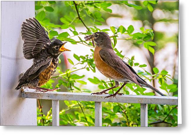 Baby Bird Greeting Cards - Baby Robin - Feed Me Mom Greeting Card by Steve Harrington