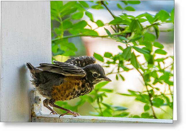 Baby Bird Greeting Cards - Baby Robin - Testing Testing 1 2 3 Greeting Card by Steve Harrington