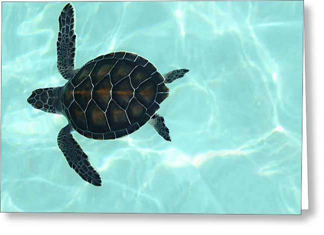 Tortoise Greeting Cards - Baby Sea Turtle Greeting Card by Ellen Henneke