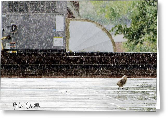 Rooftop Photographs Greeting Cards - Baby Seagull Running in the rain Greeting Card by Bob Orsillo