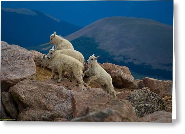 Moonrise Greeting Cards - Baby Sheep Greeting Card by Sean Kreck