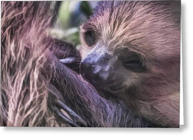 Sloth Digital Greeting Cards - Baby Sloth Greeting Card by Ray Shiu