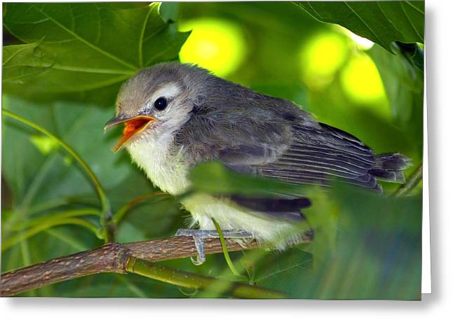 Baby Bird Greeting Cards - Baby Sparrow in the Maple Tree Greeting Card by Karon Melillo DeVega